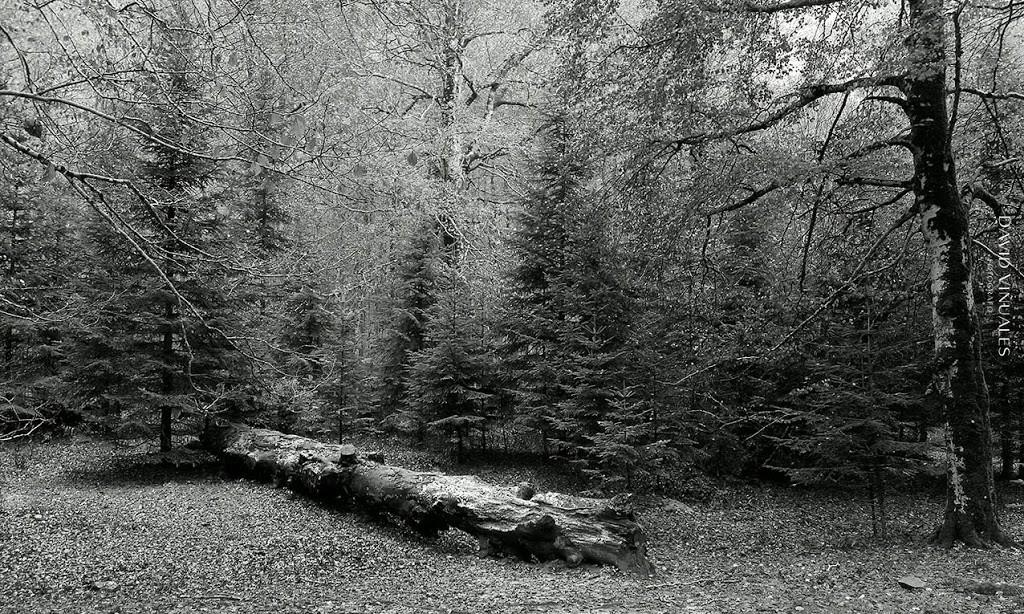 Caminando por el bosque
